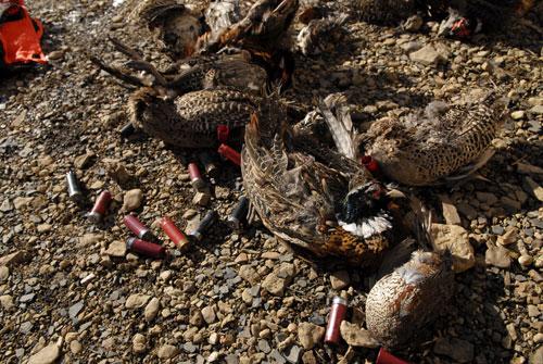 elh20080103-birds-00380.jpg